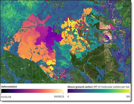 DL Borneo Forest Deforestation 2